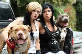 Pit Bulls And Parolees: Season 3