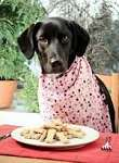 The Truth About Your Dogs Food