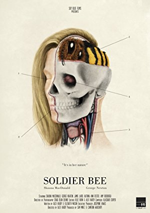 Soldier Bee