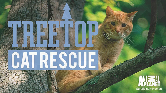 Treetop Cat Rescue: Season 1